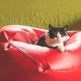cat-1842574_960_720